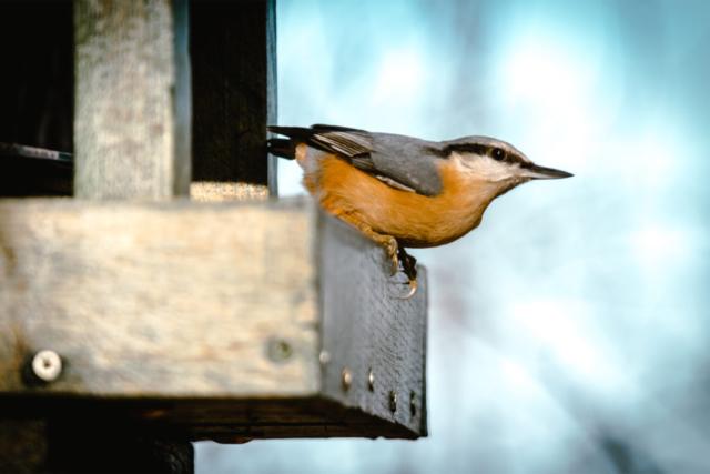 Bird, Normafa, Madár