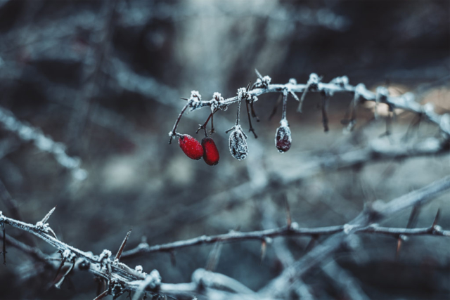 Winter, Freeze, Tél, természet, fagy