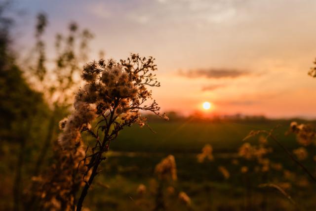 Sunset, Napnyugta, Természet